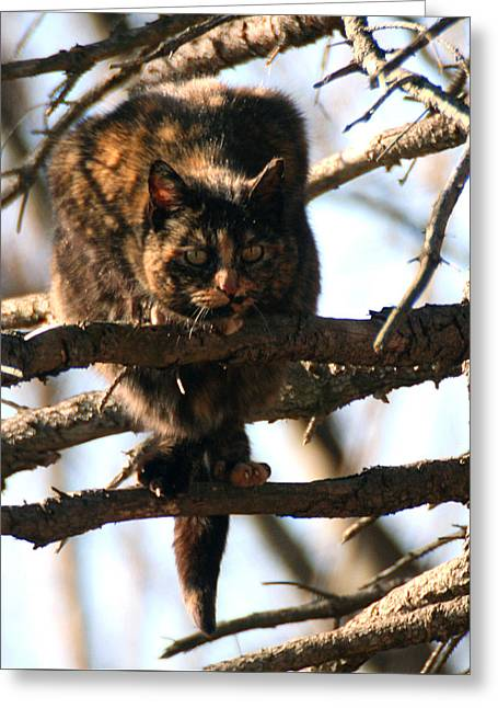 Greeting Card featuring the photograph Feral Cat In Pine Tree by William Selander