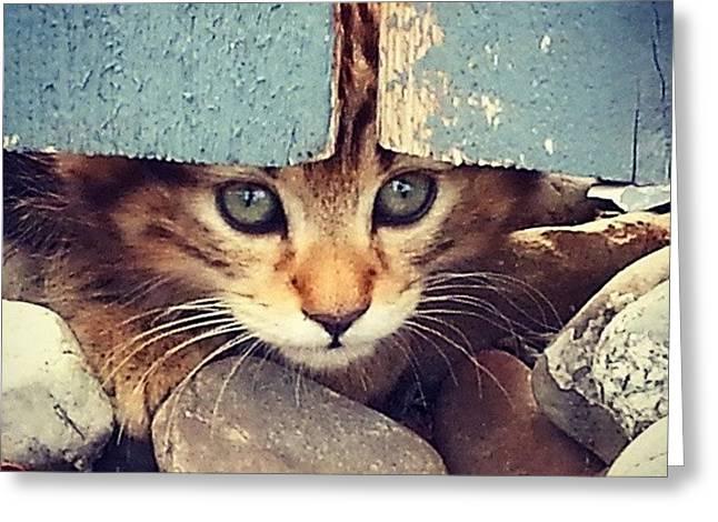 Peek A Boo Kitten Greeting Card