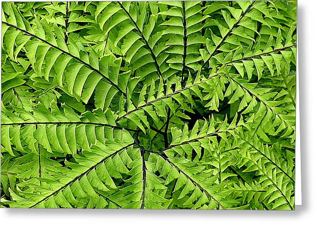 Fern Abstract Greeting Card by Brian Chase