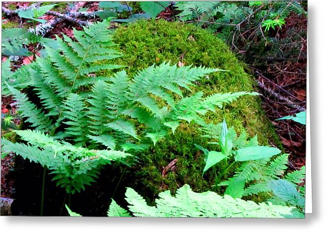 Fern And Moss Greeting Card