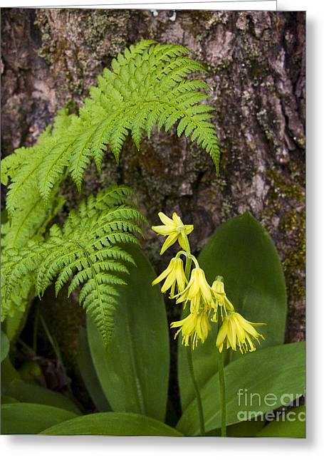 Fern And Wild Flowers Greeting Card