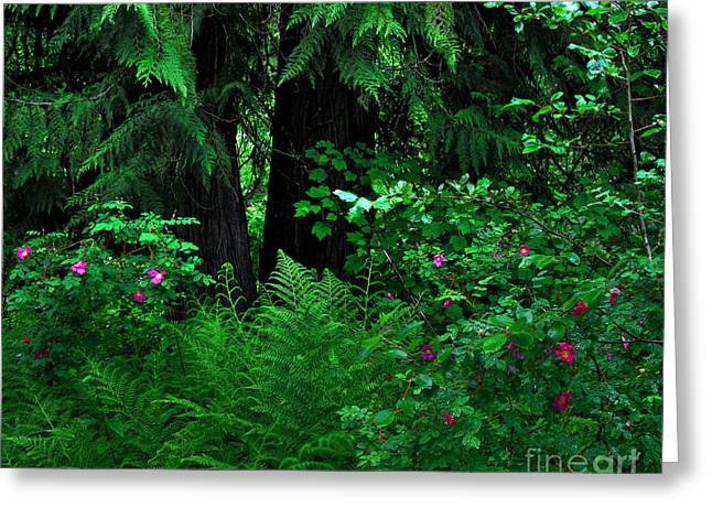 Fern And Wild Roses Greeting Card