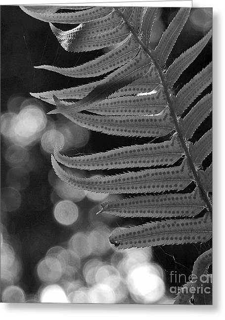 Fern Detail Greeting Card by Inge Riis McDonald