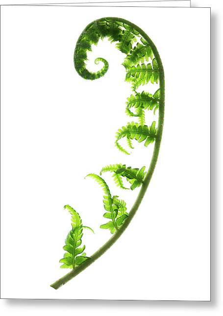 Fern Frond Greeting Card by Gustoimages/science Photo Library