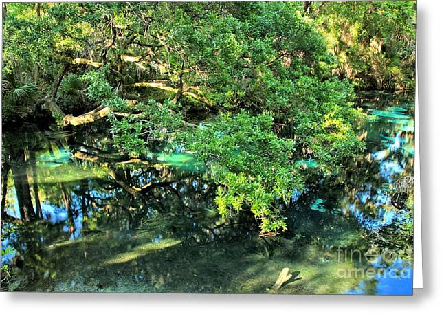 Fern Hammock At Juniper Springs Greeting Card by Adam Jewell