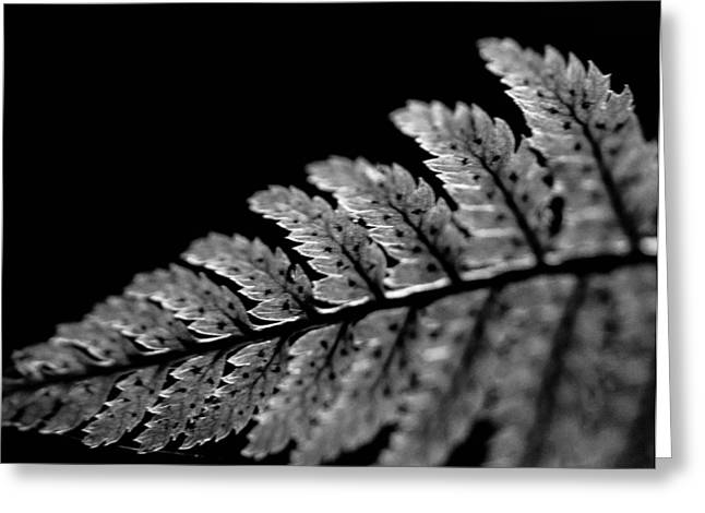 Fern In Cameo Greeting Card by Haren Images- Kriss Haren