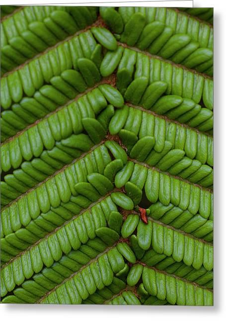 Fern, Kula Botanical Garden, Upcountry Greeting Card