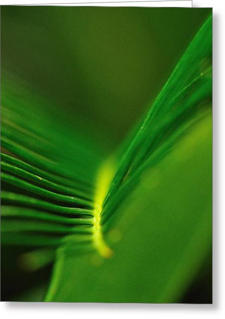 Fern Lines Greeting Card