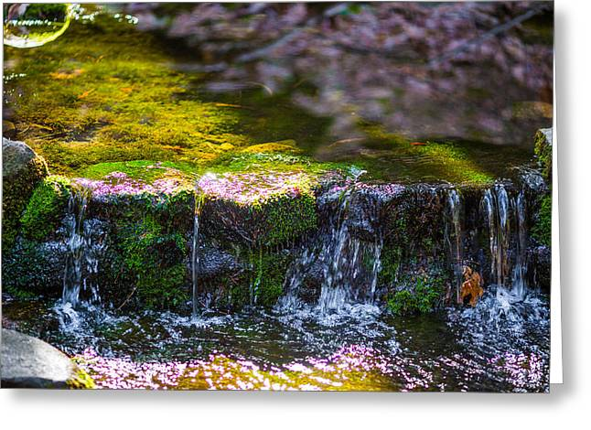 Fern Spring Greeting Card by Mike Lee