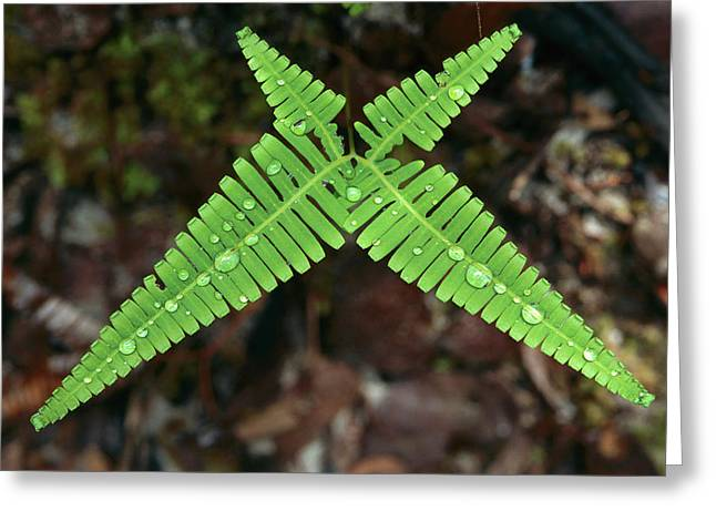 Fern With Water Drops Greeting Card