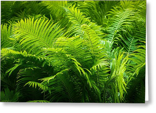Ferns 1 Greeting Card