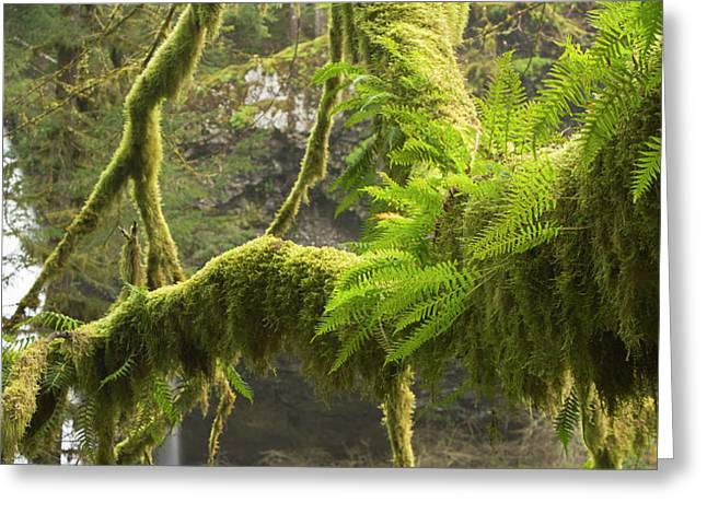 Ferns And Moss Growing On A Tree Limb Greeting Card