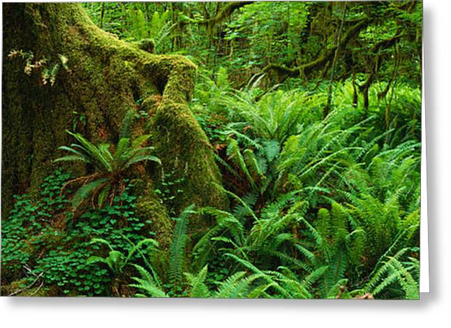 Ferns And Vines Along A Tree With Moss Greeting Card