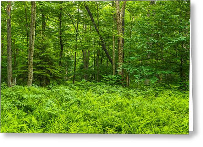 Ferns Blanketing Floor Of Summer Woods Greeting Card by Panoramic Images