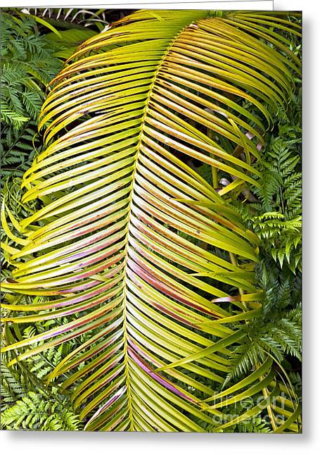 Greeting Card featuring the photograph Ferns by Kate Brown
