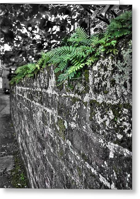 Ferns On Old Brick Wall Greeting Card
