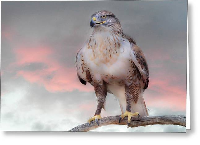 Ferruginous Hawk At Dusk Greeting Card