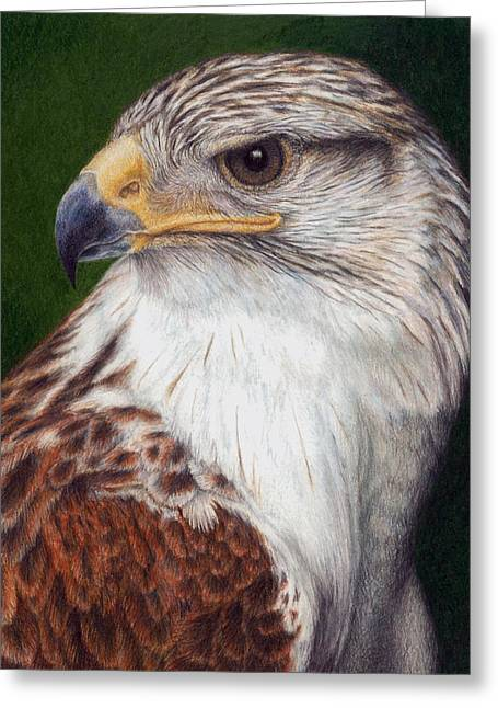 Ferruginous Hawk Greeting Card by Pat Erickson