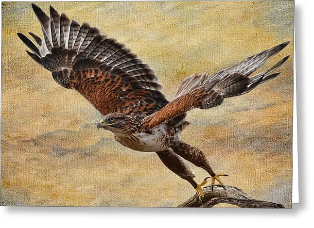 Ferruginous Hawk Greeting Card by Russell Dudzienski