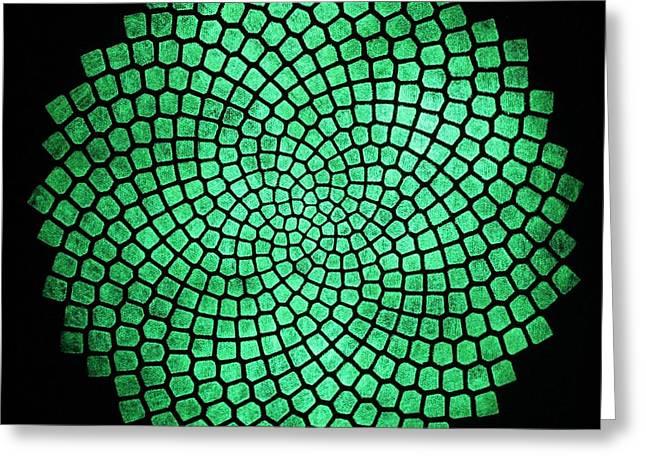 Fibonacci Sunflower Greeting Card by Twilight Vision