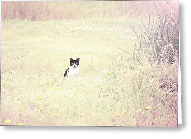 Field Cat Greeting Card by Kellie Prowse