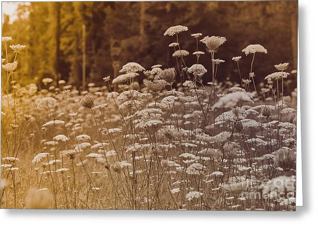 Field For The Queen Greeting Card by Kim Henderson