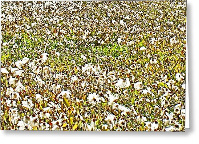Field Of Arctic Cotton Along Cassiar Highway-british Columbia  Greeting Card by Ruth Hager