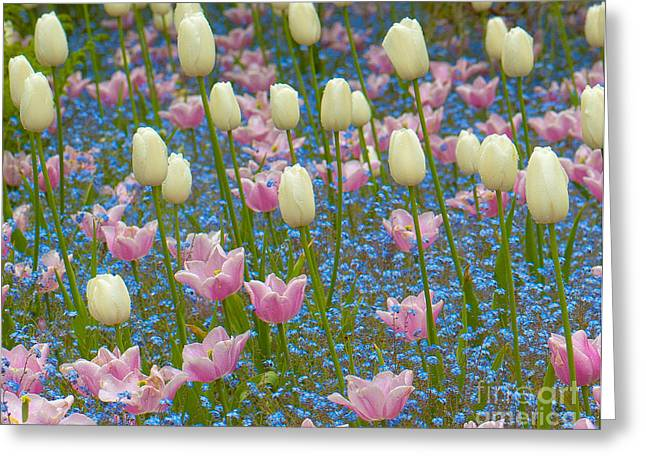 Field Of Blooms Greeting Card by Sarah Crites