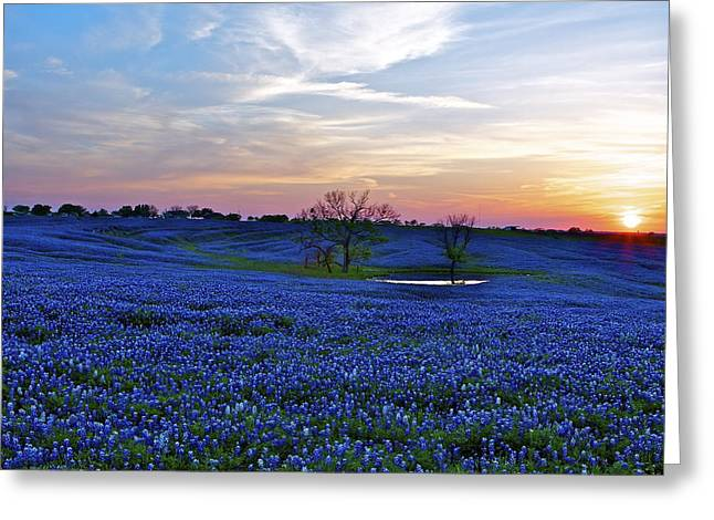 Field Of Blue Greeting Card by John Babis