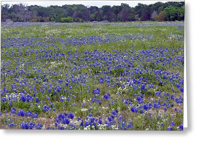 Field Of Bluebonnets Greeting Card by Judith Russell-Tooth