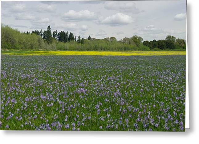 Field Of Camas And Western Buttercup Greeting Card by John Higby
