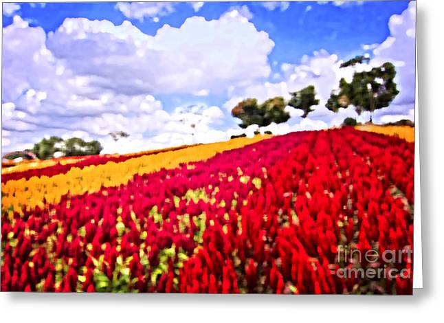 Field Of Colorful Plumed Cockscomb Greeting Card by Beverly Claire Kaiya