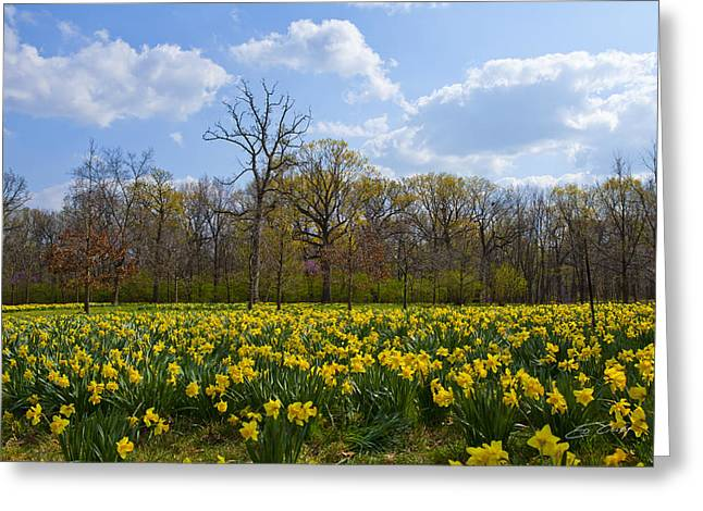 Field Of Daffodils At The Morton Arboretum Greeting Card
