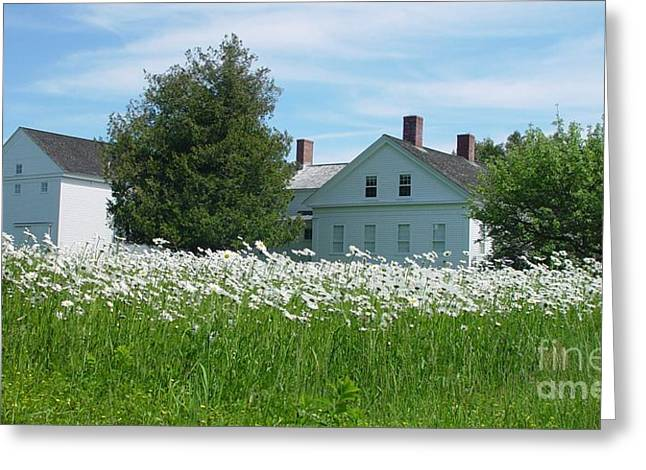 Field Of Daisies 2 Greeting Card by Christopher Mace