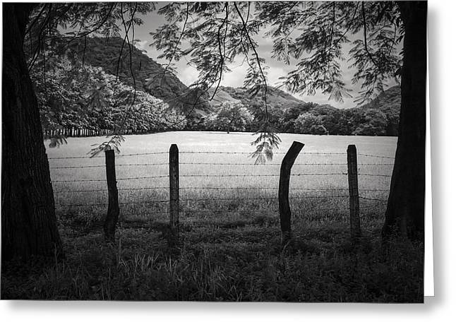 Greeting Card featuring the photograph Field Of Dreams by Antonio Jorge Nunes