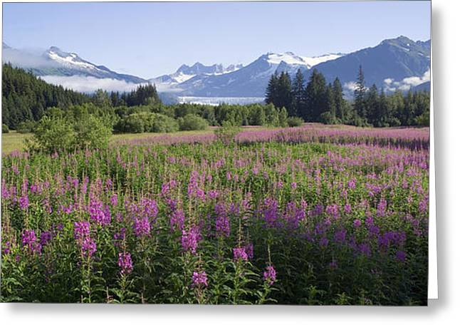 Field Of Fireweed With Coast Mountains Greeting Card