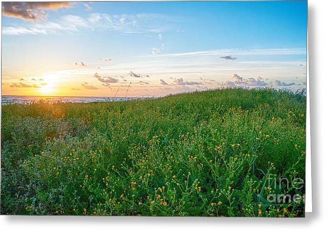 Field Of Flowers At Sunrise  Greeting Card by Tammy Smith