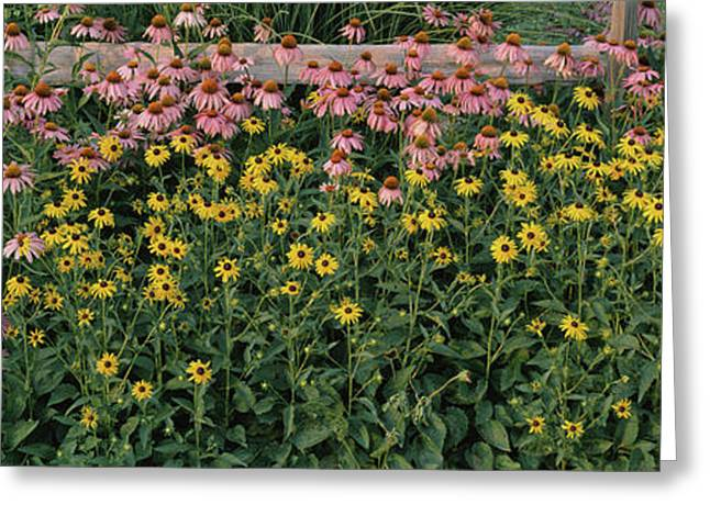 Field Of Flowers In Bloom, Marion Greeting Card by Panoramic Images