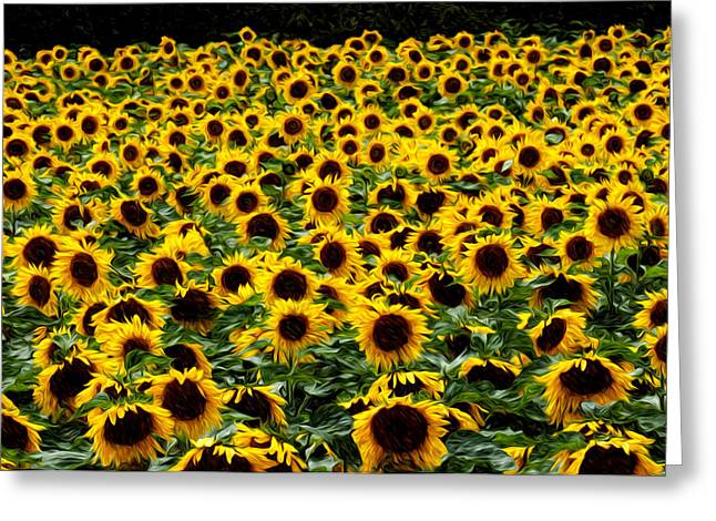Field Of Flowers Greeting Card by Mitchell Brown