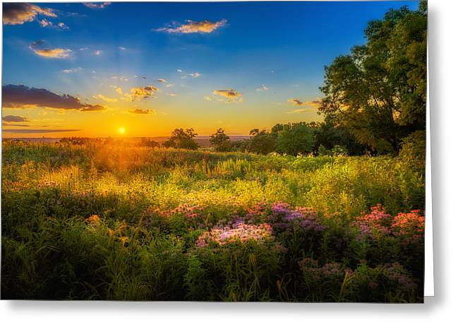 Field Of Flowers Sunset Greeting Card by Mark Goodman
