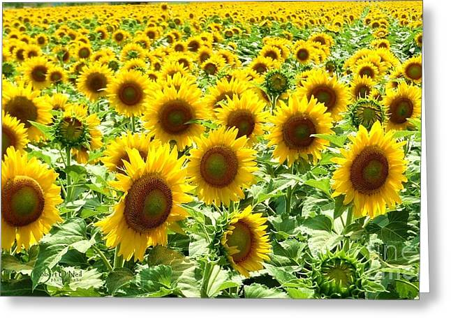 Field Of Glory Greeting Card by Robert ONeil