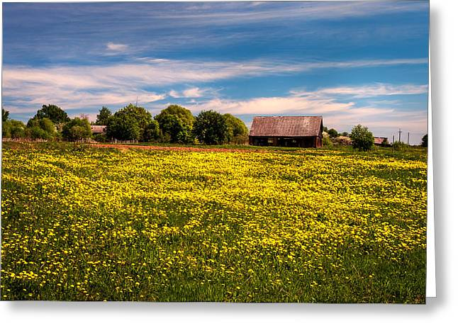 Field Of Gold. Dandelions At Village Greeting Card by Jenny Rainbow