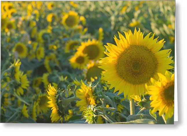Field Of Happiness Greeting Card