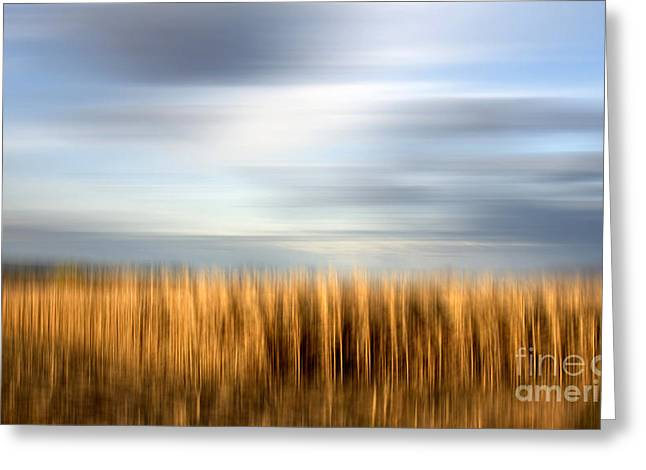 Field Of Maize Greeting Card by Bernard Jaubert