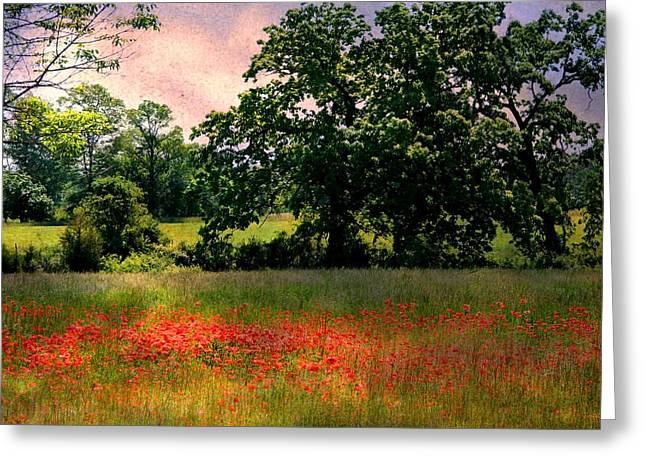 Field Of Poppies Greeting Card by Anne McDonald