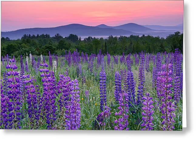 Field Of Purple Greeting Card