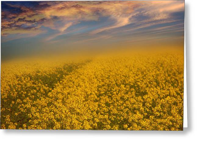 Field Of Rapeseed  Greeting Card by Monika Pachecka