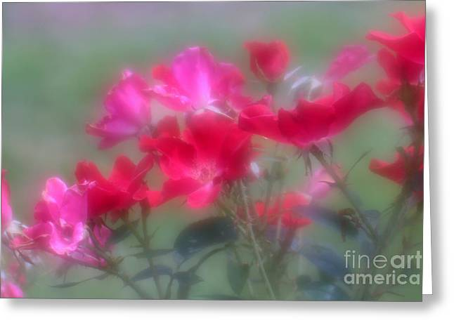 Field Of Roses Greeting Card by Mary Lou Chmura
