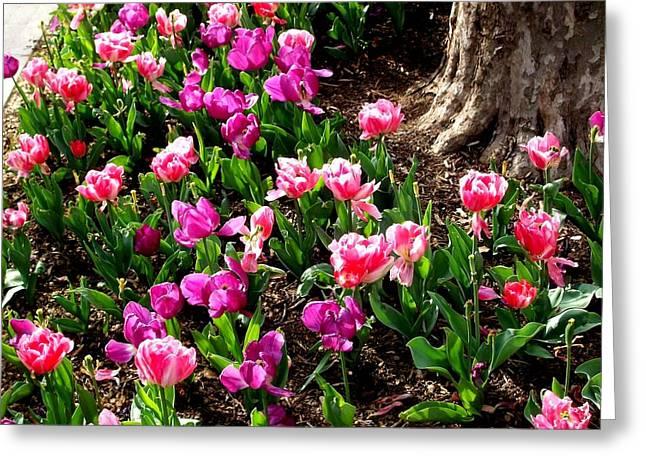 'field Of Springtime'  Greeting Card