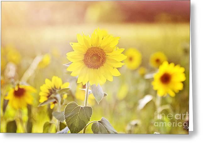 Field Of Sunshine Greeting Card by Scott Pellegrin